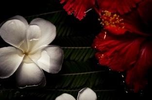 Maldived wedding photography77