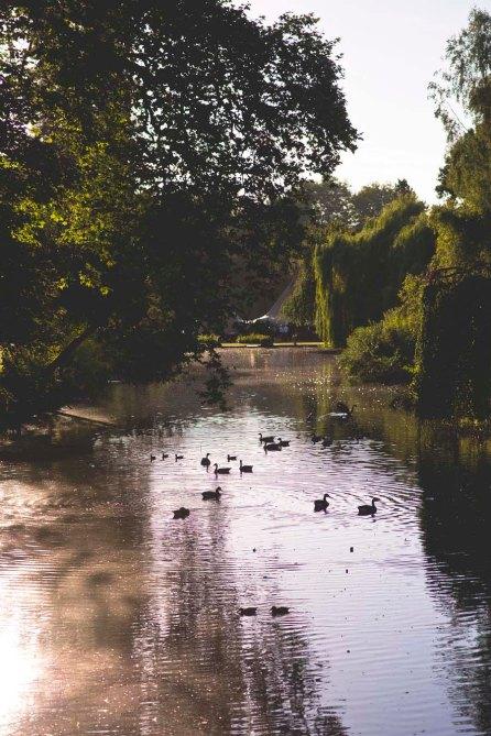 Wedding Busbridge Lakes, Surrey129
